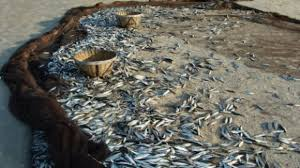 Portuguese and Spanish sardine fisheries organizations meet today in Vigo